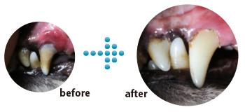 使用開始から3週間、初めて歯を拭いた後